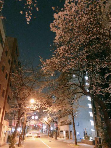 ヘヴンズエクレール 夜桜