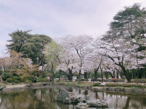 靖国神社 神池庭園桜