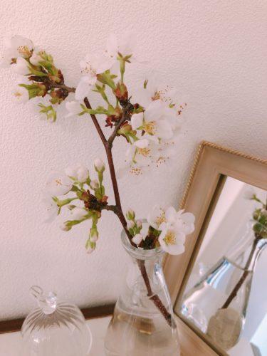 サロンの桜