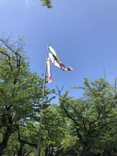 鯉のぼり・靖国神社